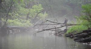 Man fishing creek in fog cropped