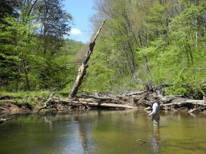 Learn to read the water, one of the 11 things fly fishermen must learn