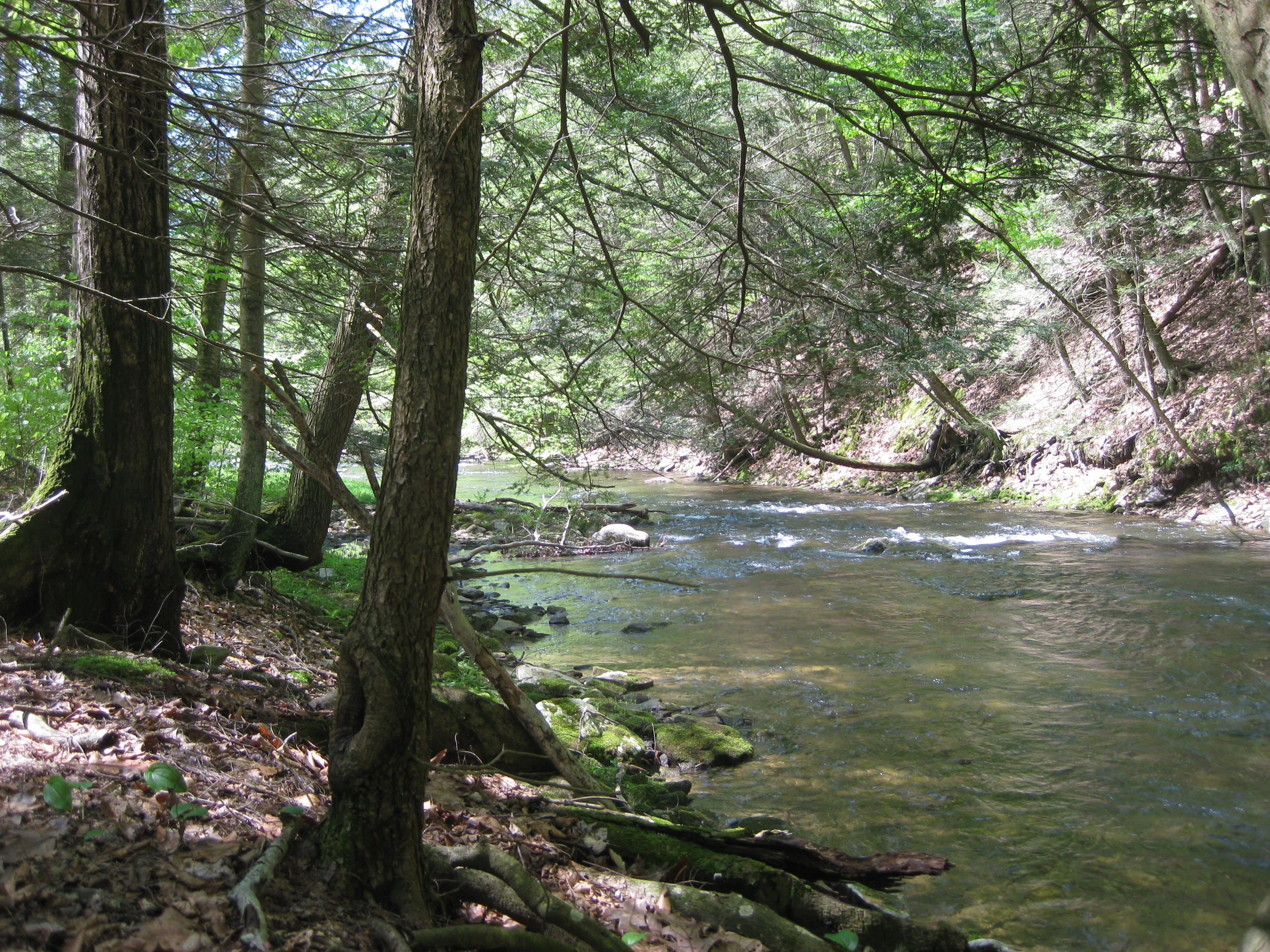 How to Read a Trout Stream to Catch More Trout?