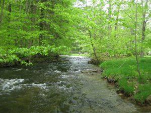 free stone stream